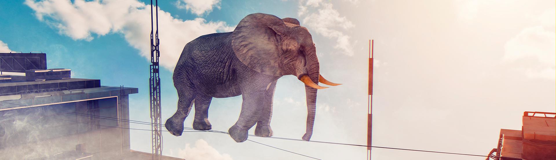 Ein Elefant auf einem Drahtseil